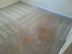 carpet before cleaning by Mr Steam